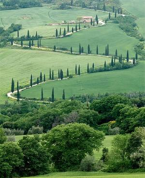 A winding road lined with cyprus trees in typical Tuscany countryside.