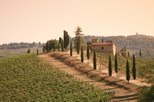 Chianti wine tasting tour from Florence