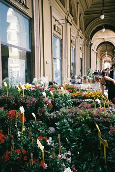 Flowers and plants for sale at the flower market, Florence