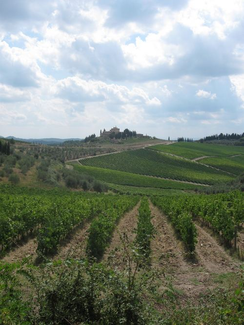 italian wine region in tuscany with a hilltop village in the background
