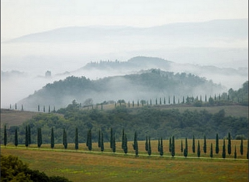 Typical Tuscany with cypress trees on a misty morning